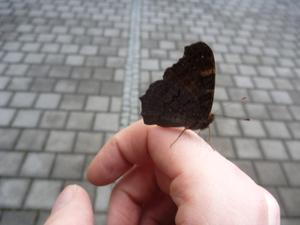 schmetterling1.jpg